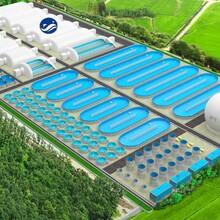 农村水产优势项目鱼菜共生养鱼系统工厂化循环水养殖图片