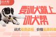 安徽狗狗训练基地-狗狗如何训练-派多格寄训中心