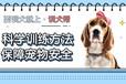 福州狗狗训练学校-狗狗如何训练-派多格寄训中心