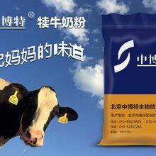 母牛早产没奶小羊怎么喂养中博特犊牛奶粉