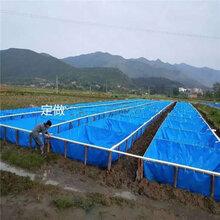 新时代的大发展养殖帆布水池养虾帆布水池篷布养鱼水池图片