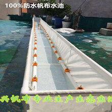 江苏大棚养殖龙虾提供刀刮布帆布水池对虾篷布池子图片