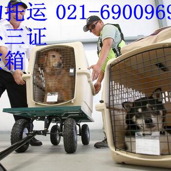 上海航空宠物托运费用从上海托运狗狗到外地多少钱