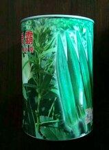 日本绿灞水果秋葵种子图片