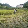 电动锄头多少钱一台,万能小型锄地松土机,多用途除草机