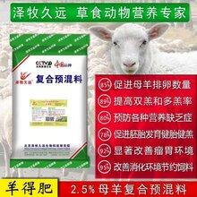 母羊,怎样养才能保证效益?