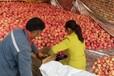 山東煙臺紅富士蘋果水果新鮮當季應季整箱10斤帶箱大果鮮果脆甜吃