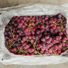 巨峰葡萄價格巨峰葡萄供應商圖片