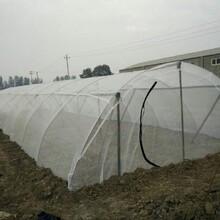 抗曬結實耐用蝗蟲養殖網成本低提高效益圖片