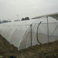抗晒结实耐用蝗虫养殖网成本低提高效益图片