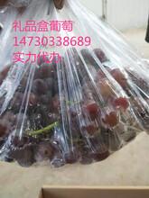 巨峰葡萄/禮品盒巨峰葡萄/紅提葡萄多品種圖片