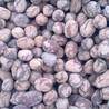 芜湖陶粒品质保障价格全市最低十几年大品牌值得信赖