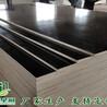 建筑模板工地建筑模板定制建筑模板建筑模板生产厂家