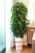天津花卉销售公司园林花卉租赁公司图片
