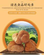 东北猴头菇蘑菇批发猴头菇种植基地产地批发图片