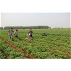人力蔬菜播种机,蔬菜播种机价格,精密蔬菜播种机,手动蔬菜播种机