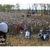 采棉機廠家采棉機配件缽施然采棉機約翰迪爾采棉機