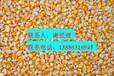 常年求购玉米棉粕