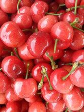 山东樱桃产地大量樱桃上市批发图片