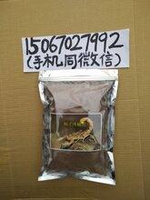 蝎子诱捕剂图片