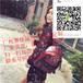 广州微信包包一手货源,一手包包批发市场质优价廉