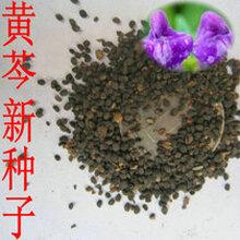 郑州花卉种子蔬菜种子药材种子草坪种子林木种子果树种子批发