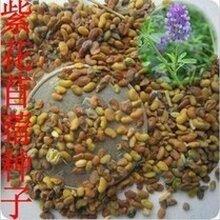 杭州蔬菜种子花卉种子药材种子草坪种子林木种子果树种子批发