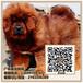广州哪里有出售藏獒犬广州藏獒犬多少钱一只