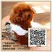 广州标准贵宾犬出售广州贵宾犬多少钱一只广东暮光狗场