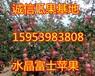 天津苹果价格天津红富士苹果便宜吗