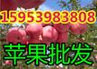 浙江苹果价格浙江红富士苹果好吃吗