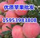 温州红富士苹果销售价格价格行情