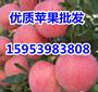 山东日照红富士苹果大量上市价格稳定