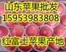 山东苹果基地产地山东红富士苹果价格批发