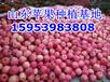 大庆红富士苹果批发多钱一斤