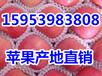 广西红富士苹果价格广西苹果价格行情