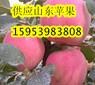 山东是红富士苹果的主要产地