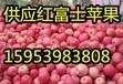 天津红富士苹果好吃价格低