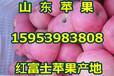 梧州苹果价格梧州红富士苹果批发价格行情