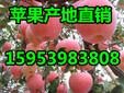 红富士苹果批发红富士苹果价格红富士苹果基地介绍