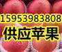 大庆红富士苹果批发产地价格今年苹果咨询报价