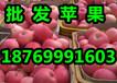 山东红富士苹果基地山东红富士苹果价格山东红富士苹果出售
