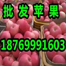 山东红富士苹果基地山东红富士苹果价格山东红富士苹果出售图片