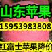 桂林红富士苹果批发今日报价