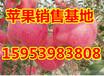 绵阳红富士苹果批发价格信息