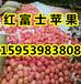 河北红富士苹果价格最新报价