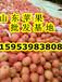 山东红富士苹果批发膜袋红富士苹果价格