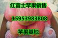 哈尔滨红富士苹果批发基地/红富士苹果价格