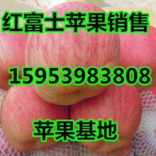 山东红富士苹果价格与详情图片