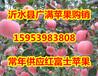 长春红富士苹果批发现在多少钱一斤/红富士苹果价格